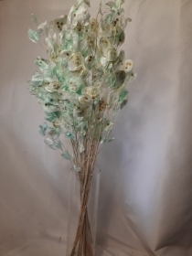 Dried Mint Green Honesty Bunch