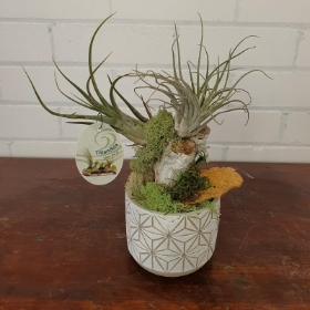 Tillandsia Pot